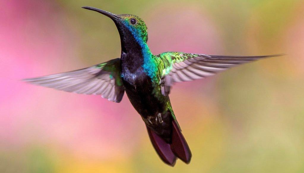 hummingbird-tantra-maat
