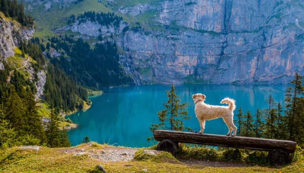 Dog and Lake